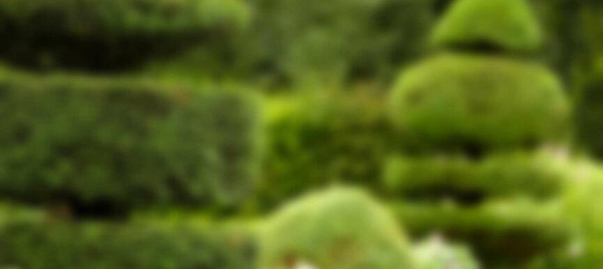 Aliquam laoreet ante ut arcu mollis integer mollis suscipit semdetra